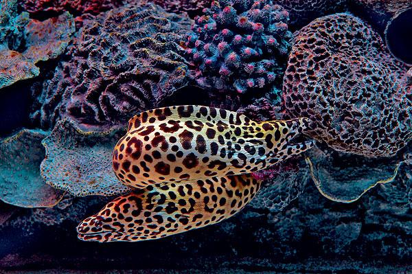 Открытие московского океанариума