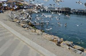 Чайки на пристани