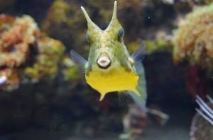 Необычная рыбка