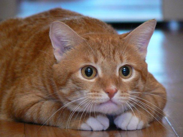 Корм Brit Care для кошек отзывы и обзор состава  Сайт
