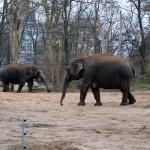 Слоны в берлинском зоопарке