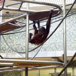 Обезьяна в берлинском зоопарке