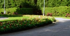 Георгины нашего парка