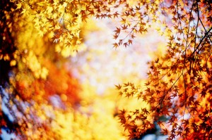 Осенний  вальс