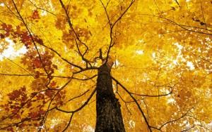 В  разгаре осень...