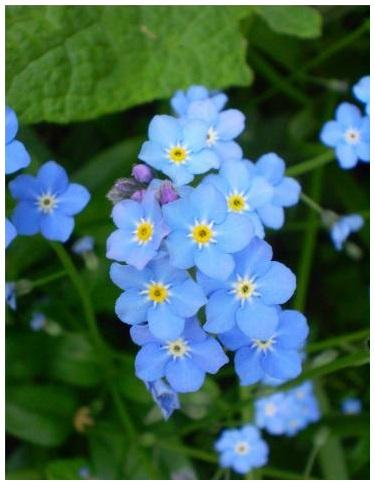 Цветы, новые стихи и проза
