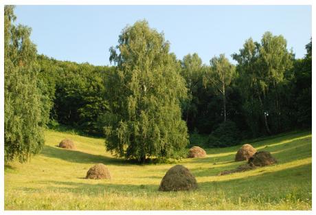 Лето, месяц  август, новые современные стихи и проза из цикла