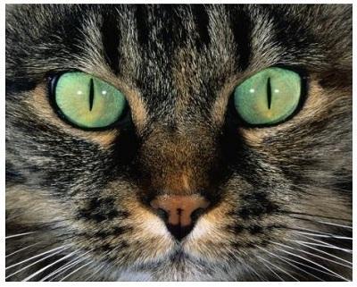 Кошки. 1 марта - день кошек! Cтихи и эссе