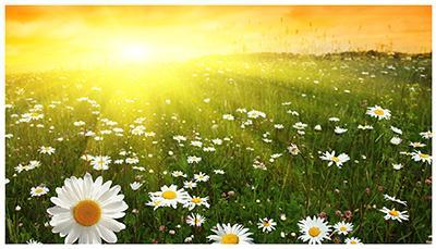 Лето, месяц июнь, современные стихи и проза из цикла