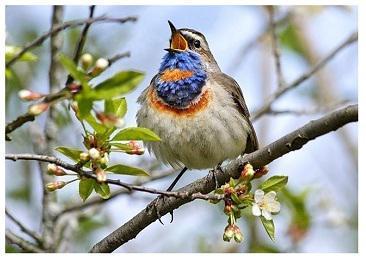 Весна, апрель...современные стихи и проза из цикла