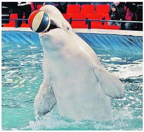 На  ВВЦ  открыт дельфинарий!