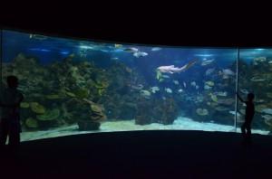 Панорама океанариума