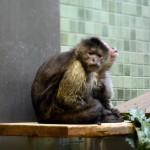 Макаки в берлинском зоопарке
