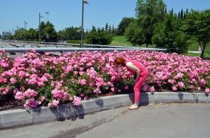 Розы Вероны