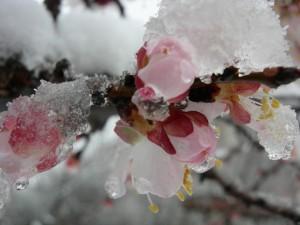 Зимой цветущий сад