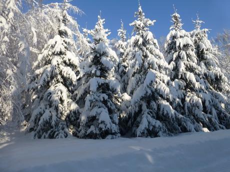 Февраль, зима… Зимняя сказка! Последний месяц зимы. Стихи  и эссе Зои Сергеевой из цикла «Времена года.»