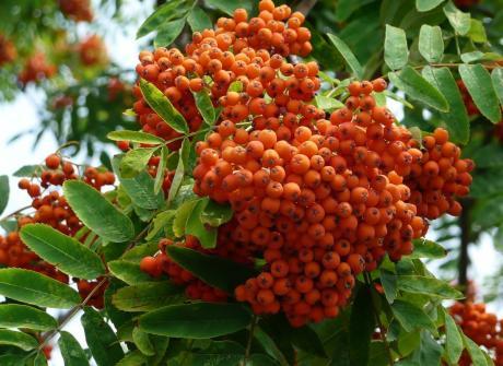 Oктябрь - золотая осень, стихи Зои  Сергеевой и проза из цикла